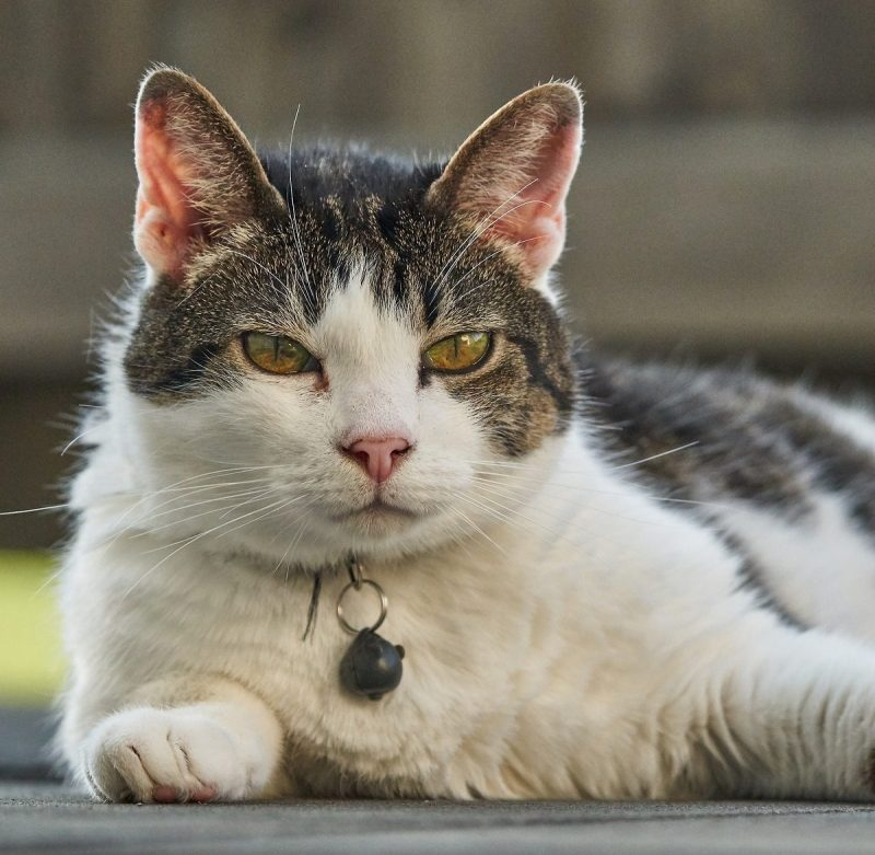 Claw Pulling Should You Be Concerned About Your Cat S Health