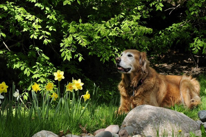Adopt an older dog