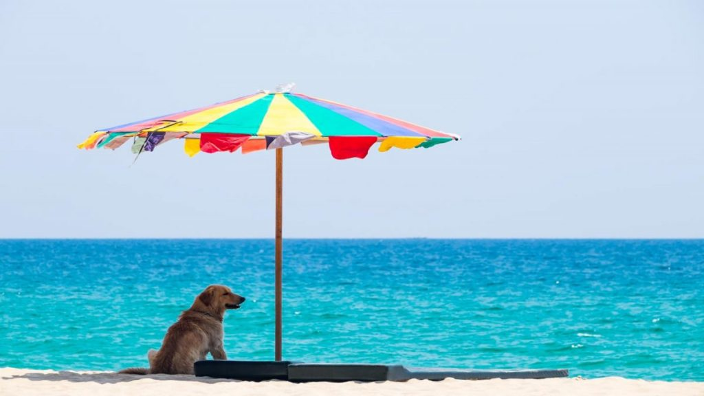 Summer holiday with Your Dog