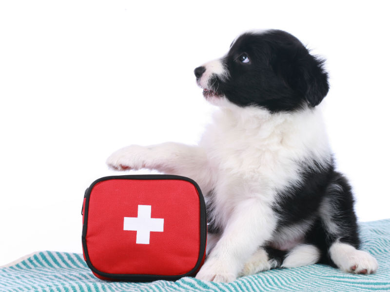 Looking after your dog's health on holiday