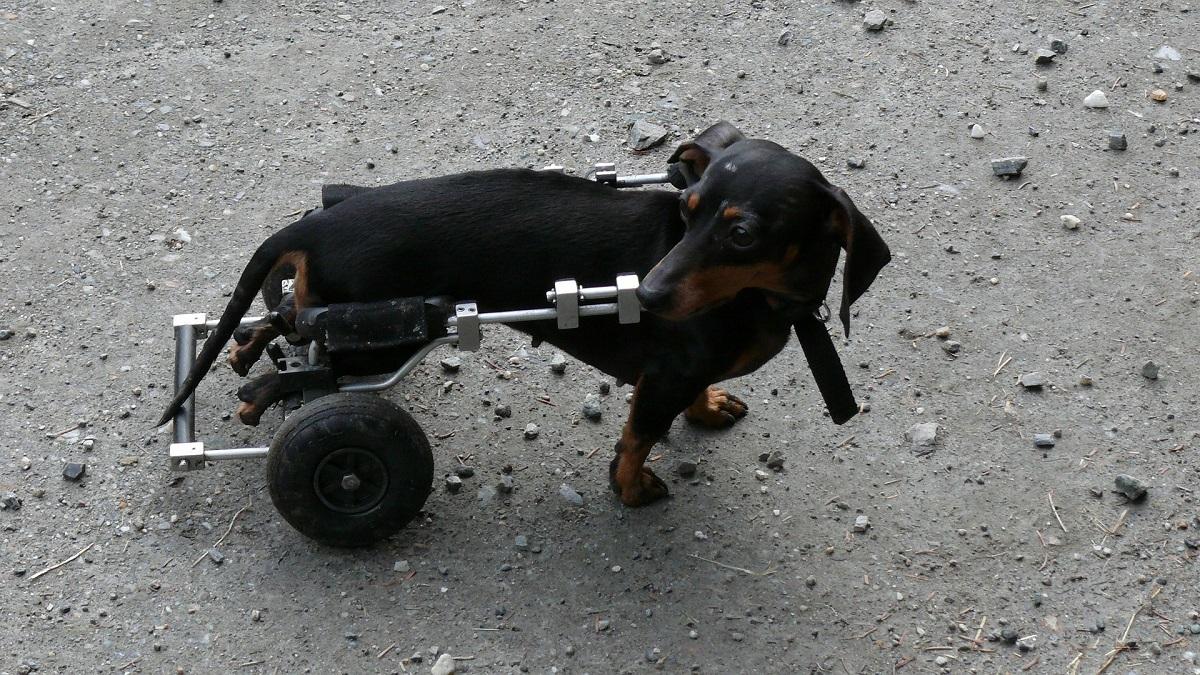 Dog enjoying improved quality of life