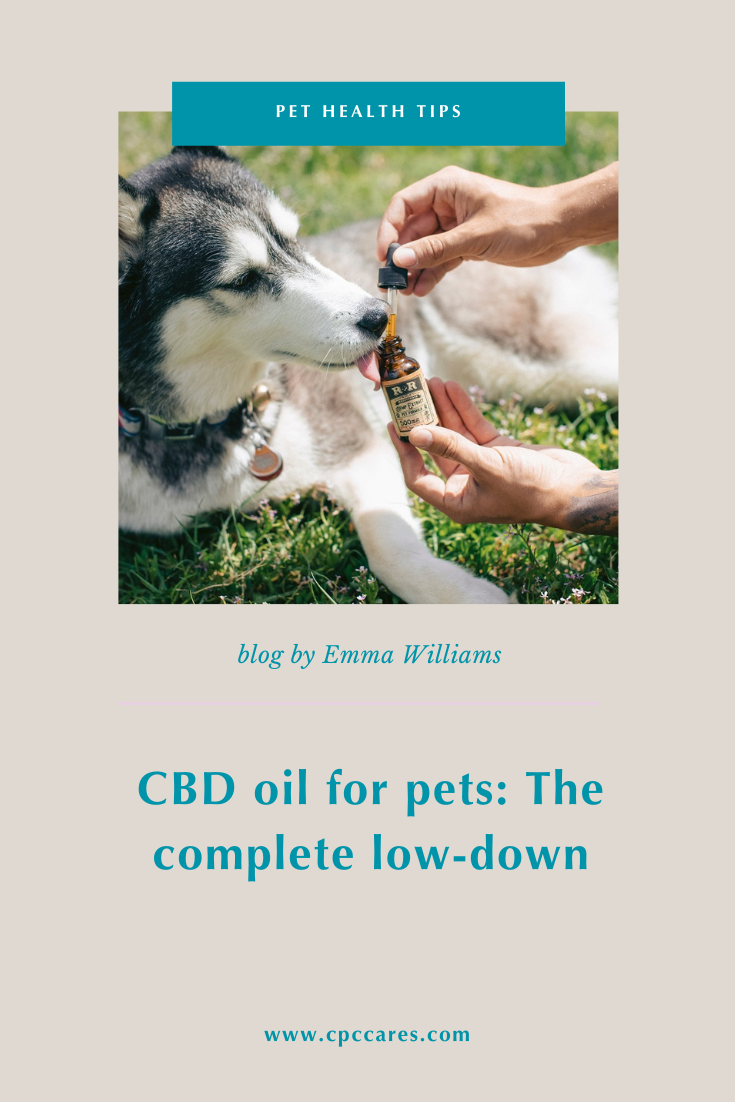 Cbd Oil For Pets The Complete Low Down Cpc Cares