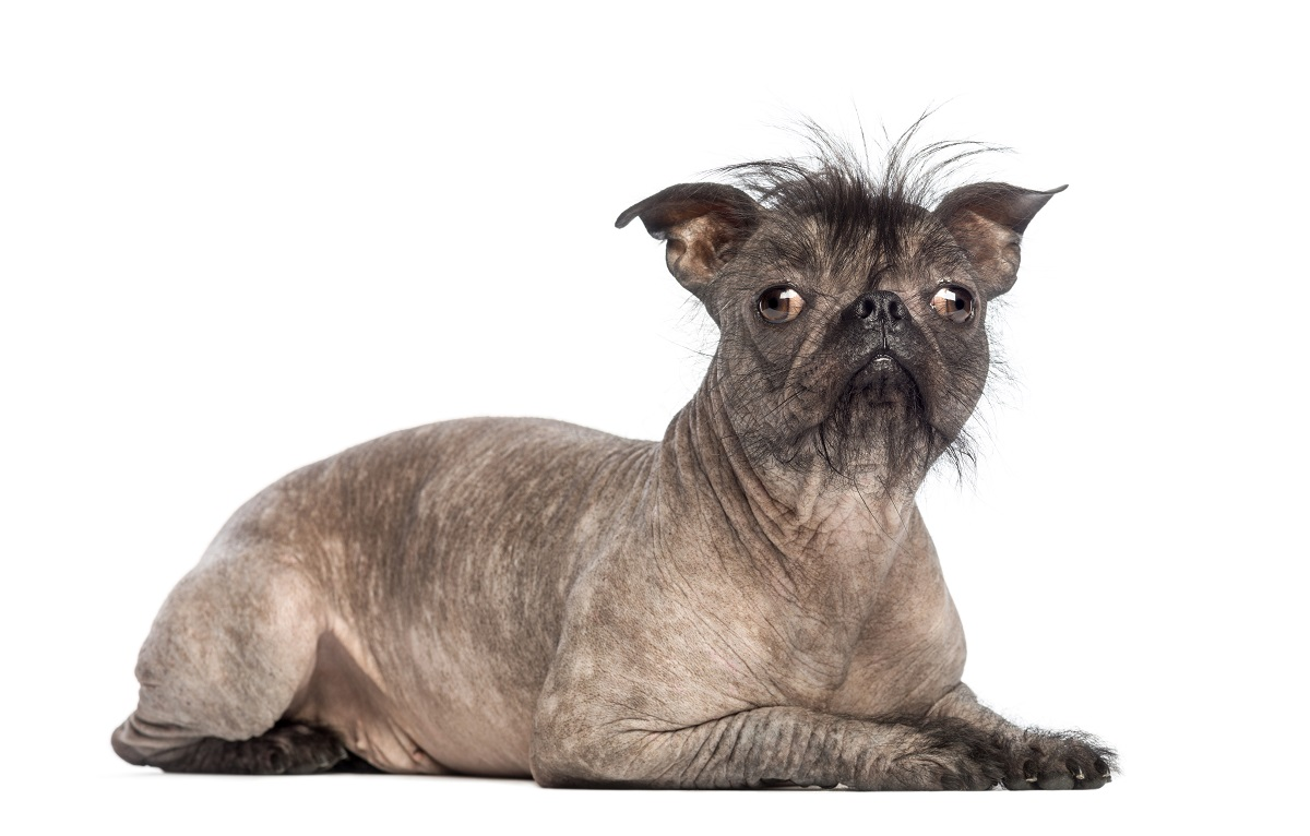 Would you prefer an ugly, cute, funny, or just plain weird dog?