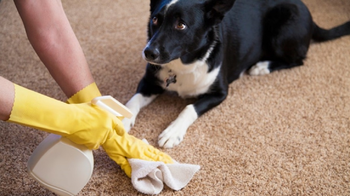 cleaning up after your dog
