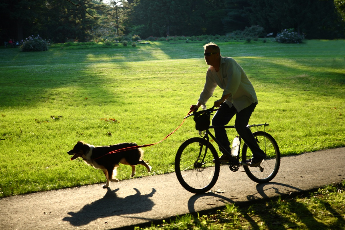 leash for cycling with your dog