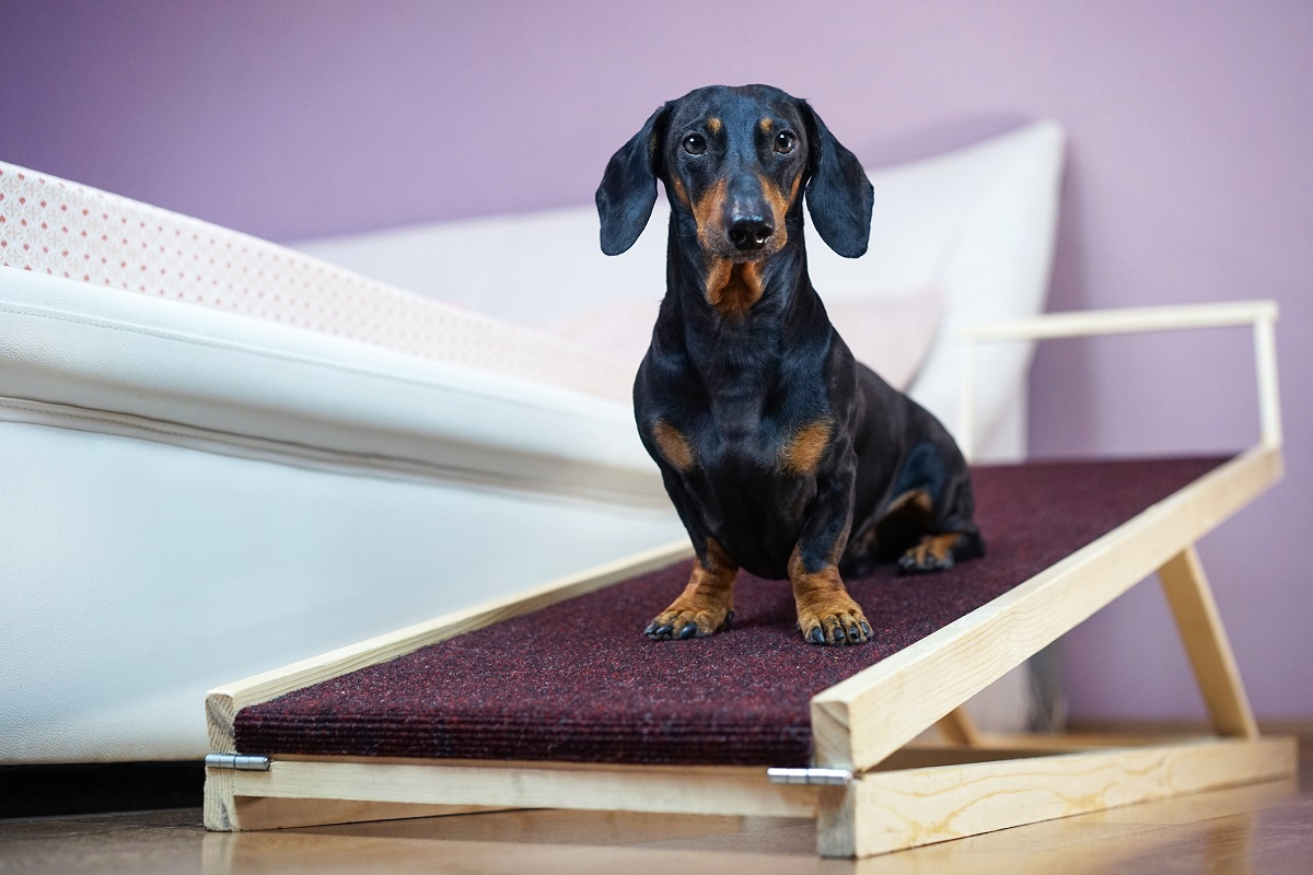 Dog mobility ramp