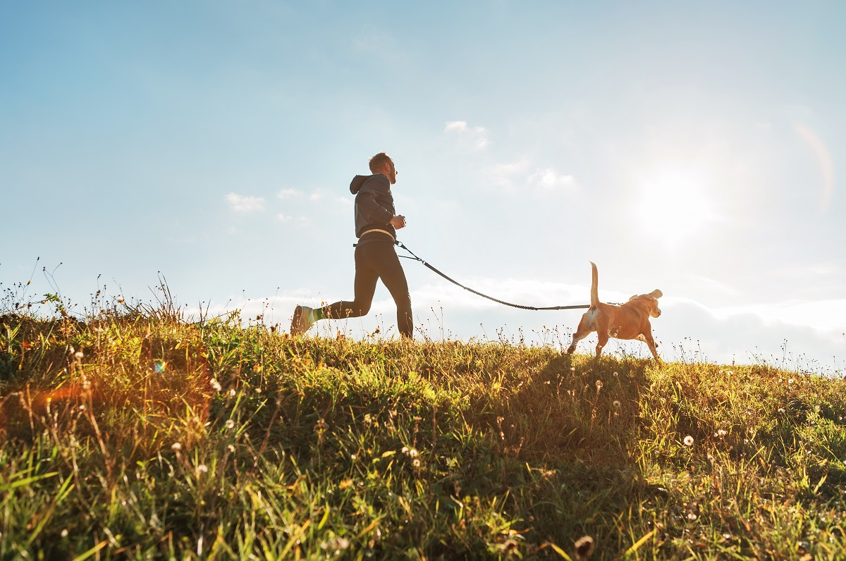 leash for jogging with your dog