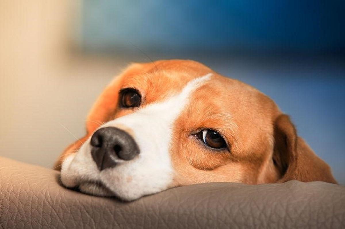 grieving pet
