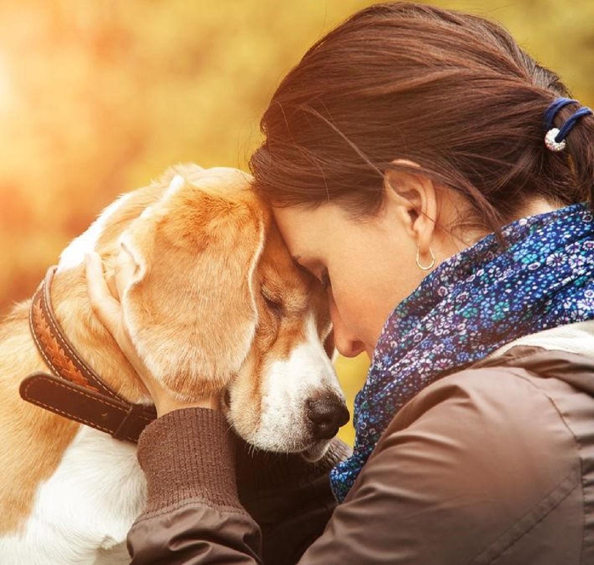 help pets grieve