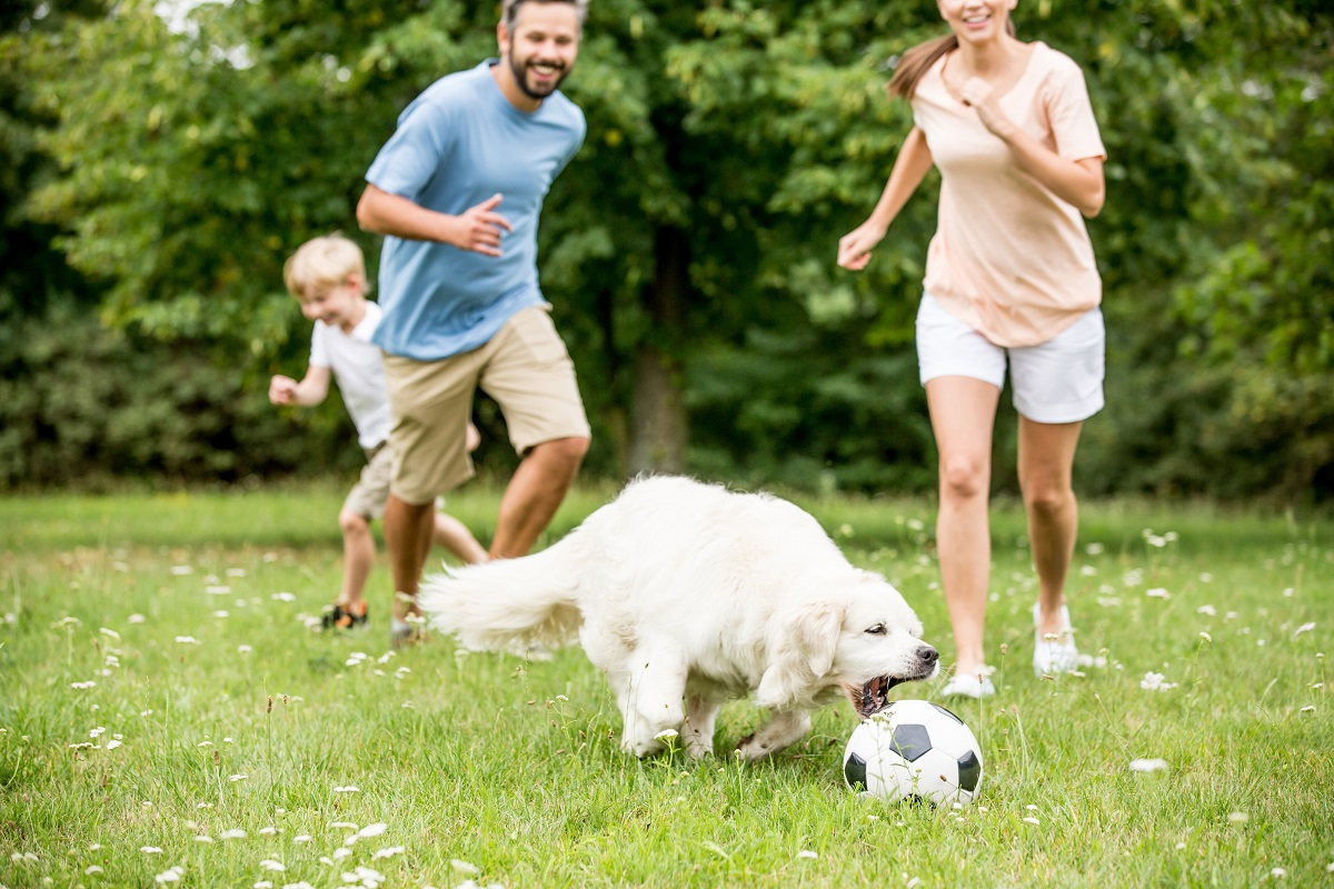 family benefits from dog ownership