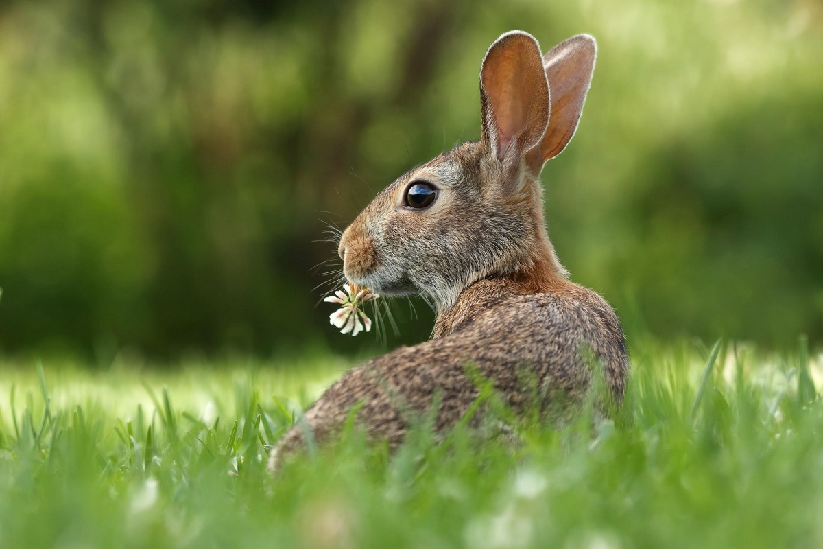 What do rabbits eat?