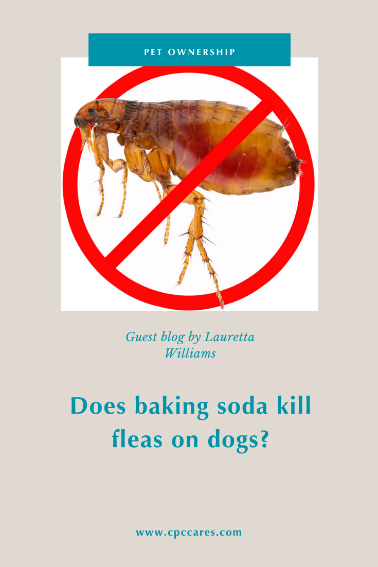 baking soda kills fleas on dogs and in the home