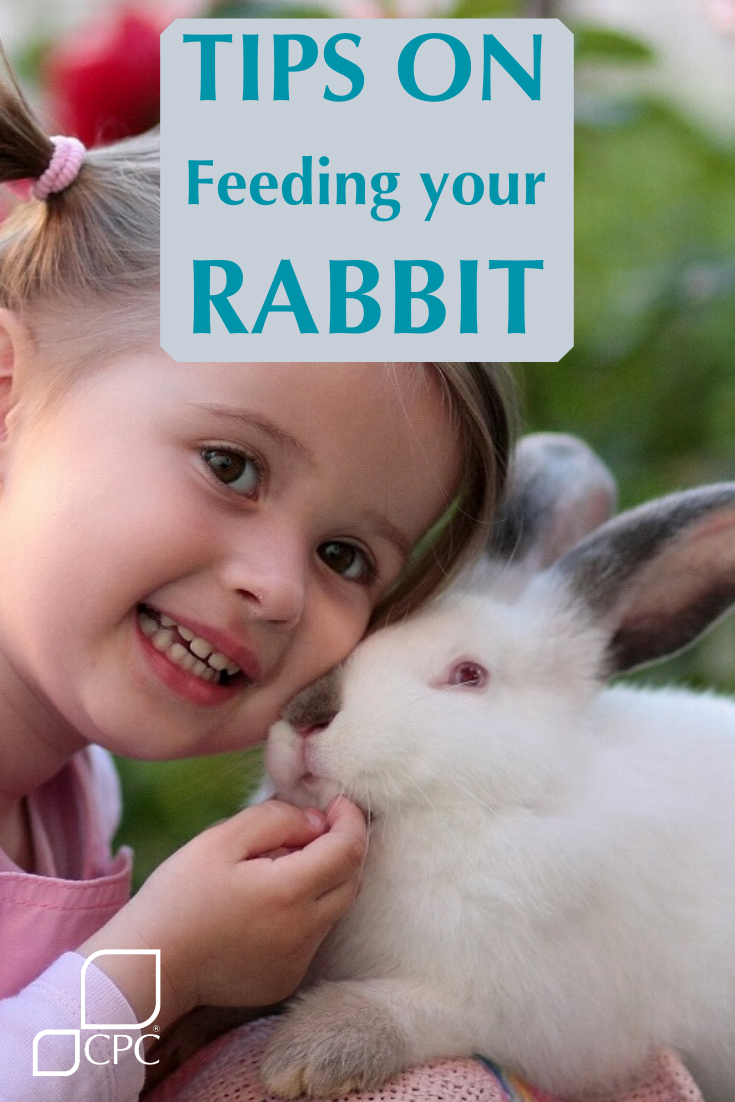 Tips on feeding your rabbit