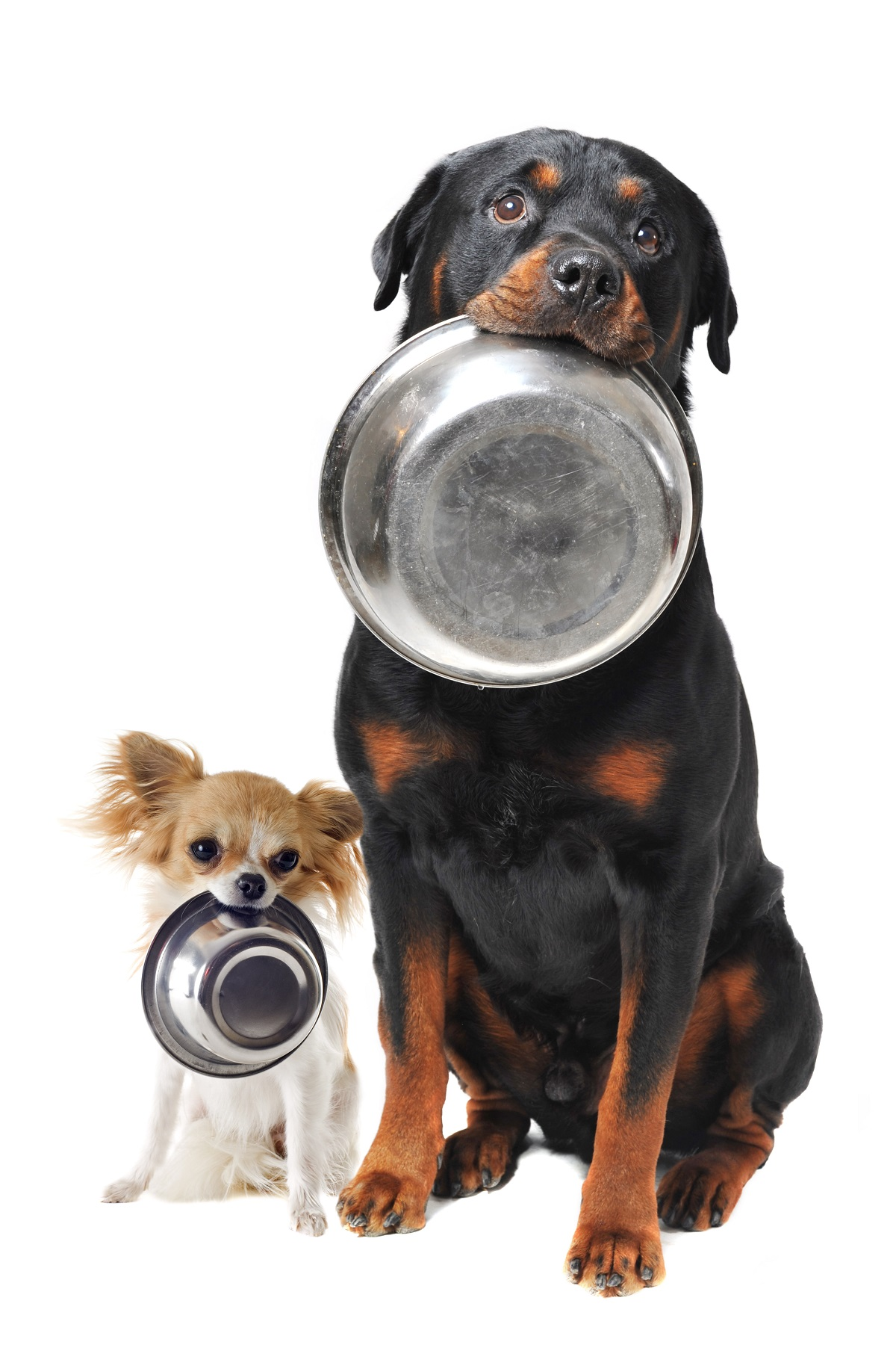 dogs with food bowls