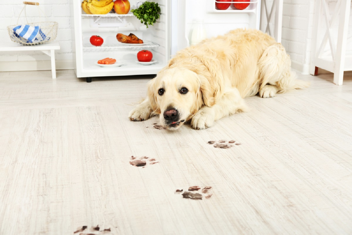 dog friendly flooring
