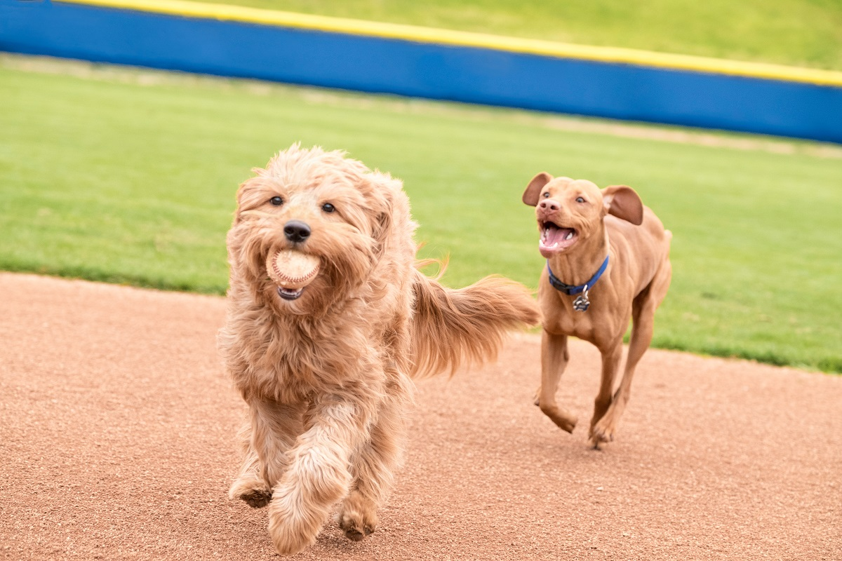 dogs playing a kennel