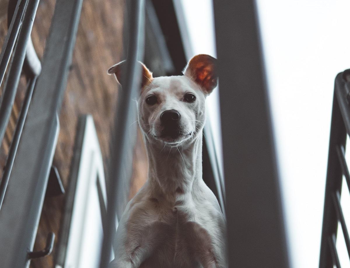 dog prone to barking