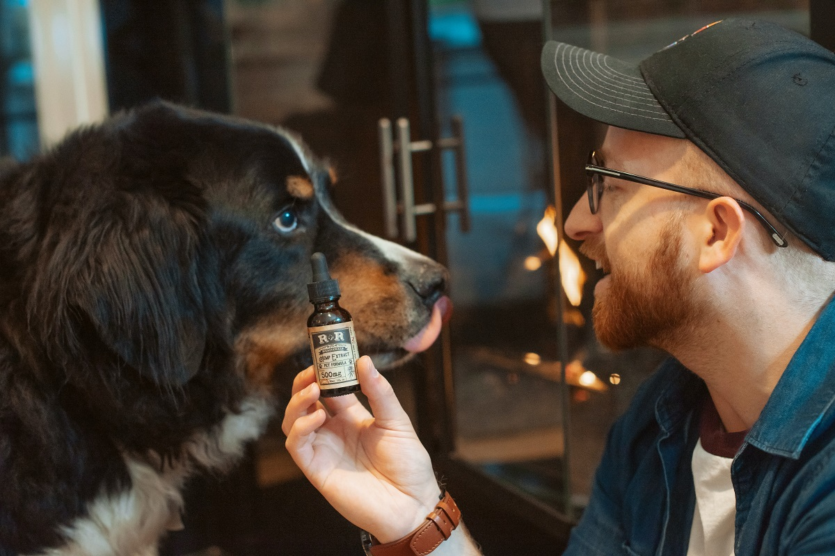 CBD oil for ageing dogs