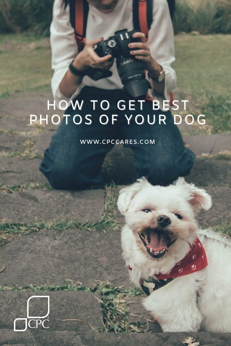 How to get how to get the best photos of your dog