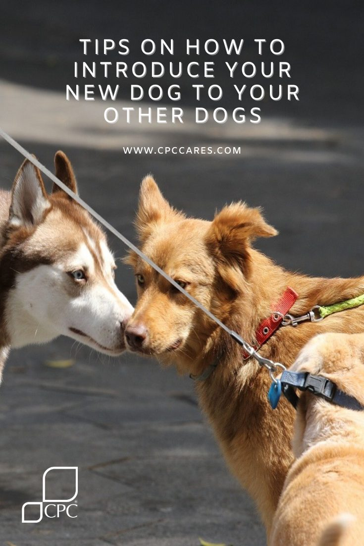 Tips on How to Introduce Your New Dog To Your Other Dogs