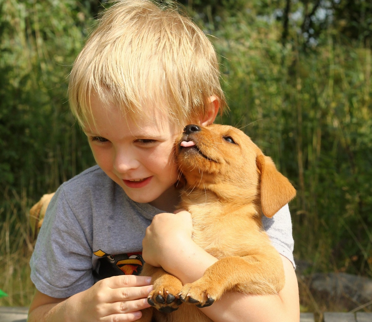 introducing your dog to children