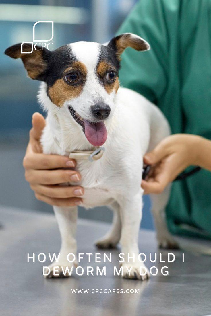 how often should I deworm my dog