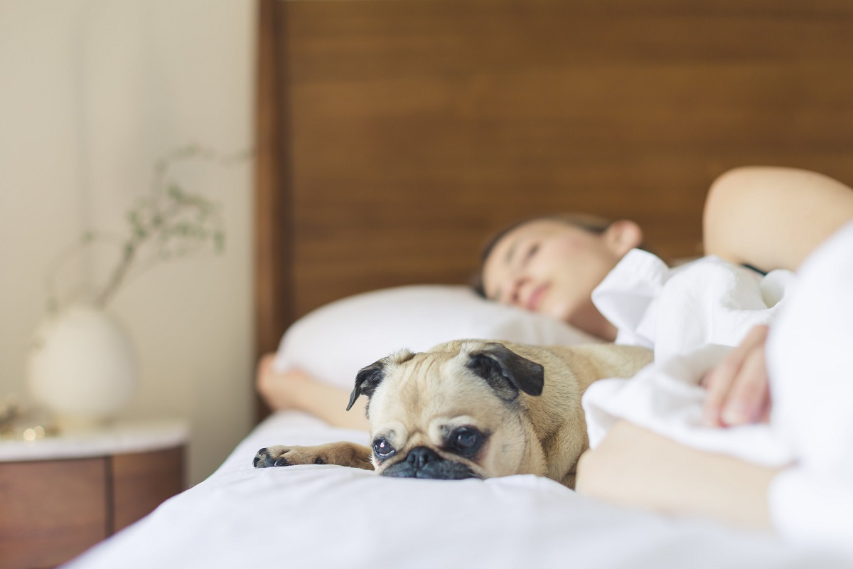 sleeping with your dog