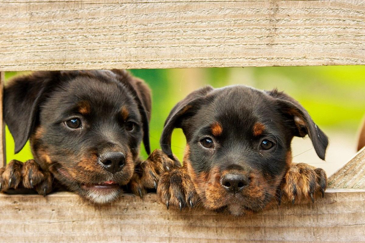 deworm puppies