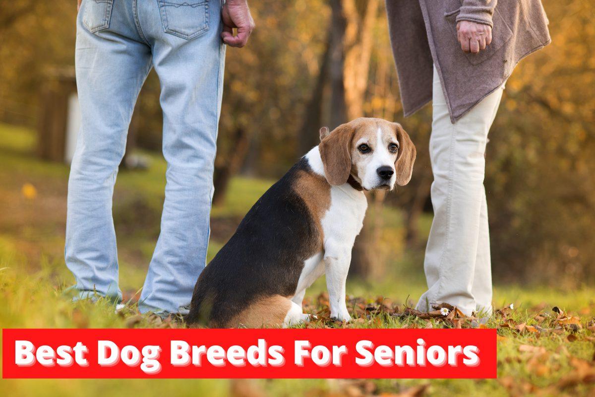 best breeds for seniors