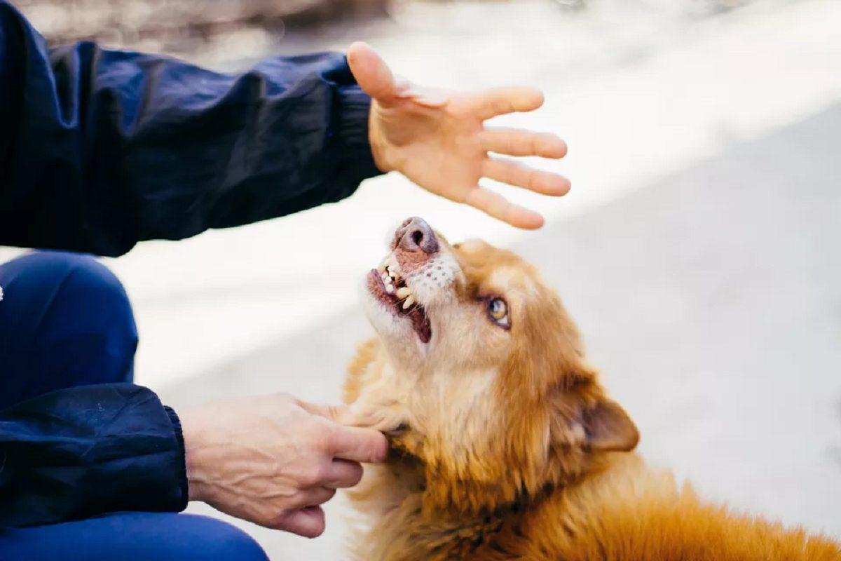 how often do dog bites happen?