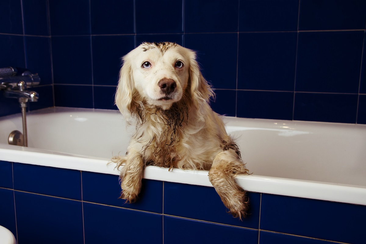 baths are important for hygiene