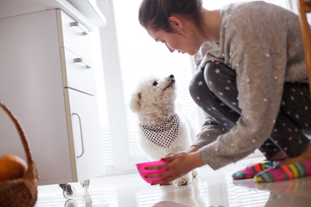 hygiene tip - cleaning dog bowls