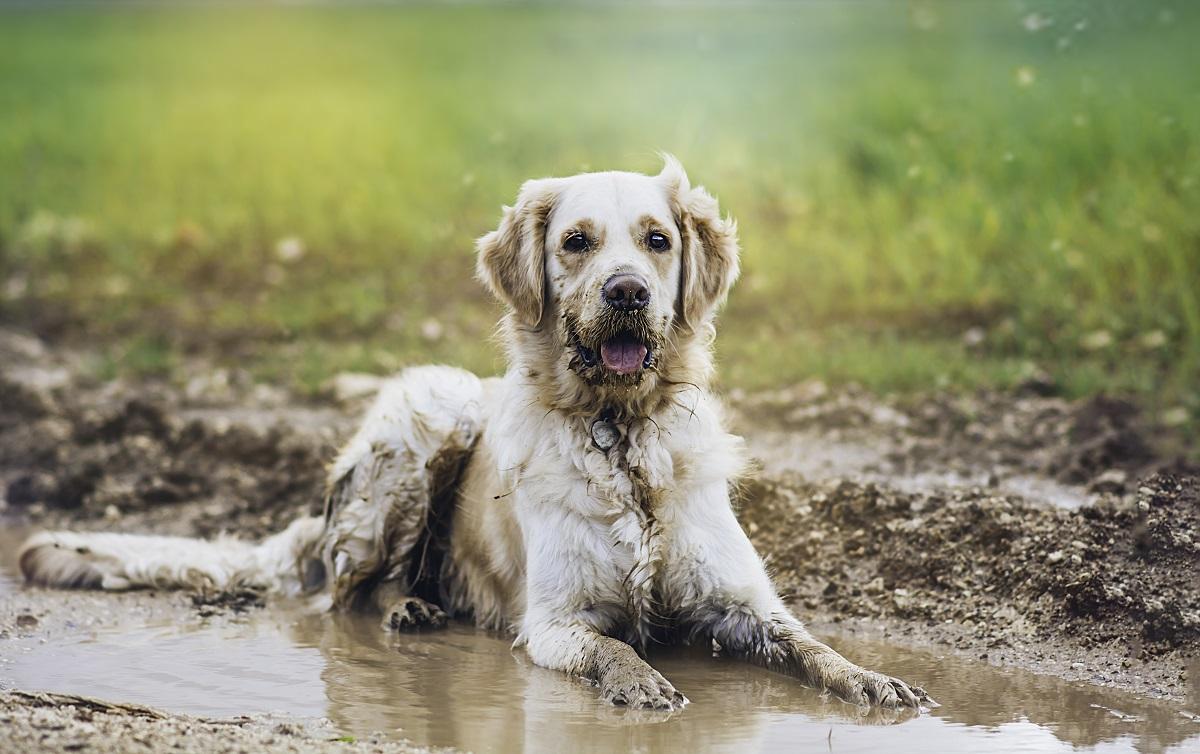 muddy dog needs a bath