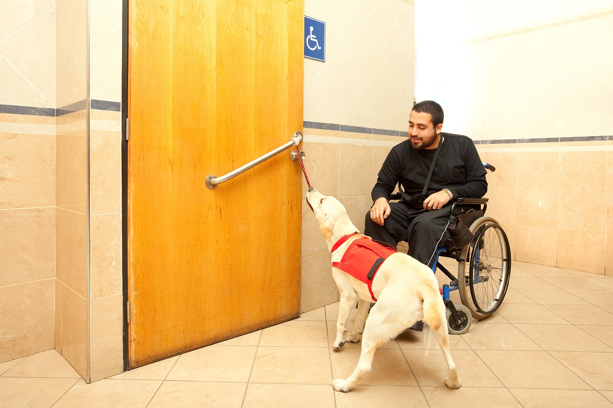 Assistance dog with diabled owner