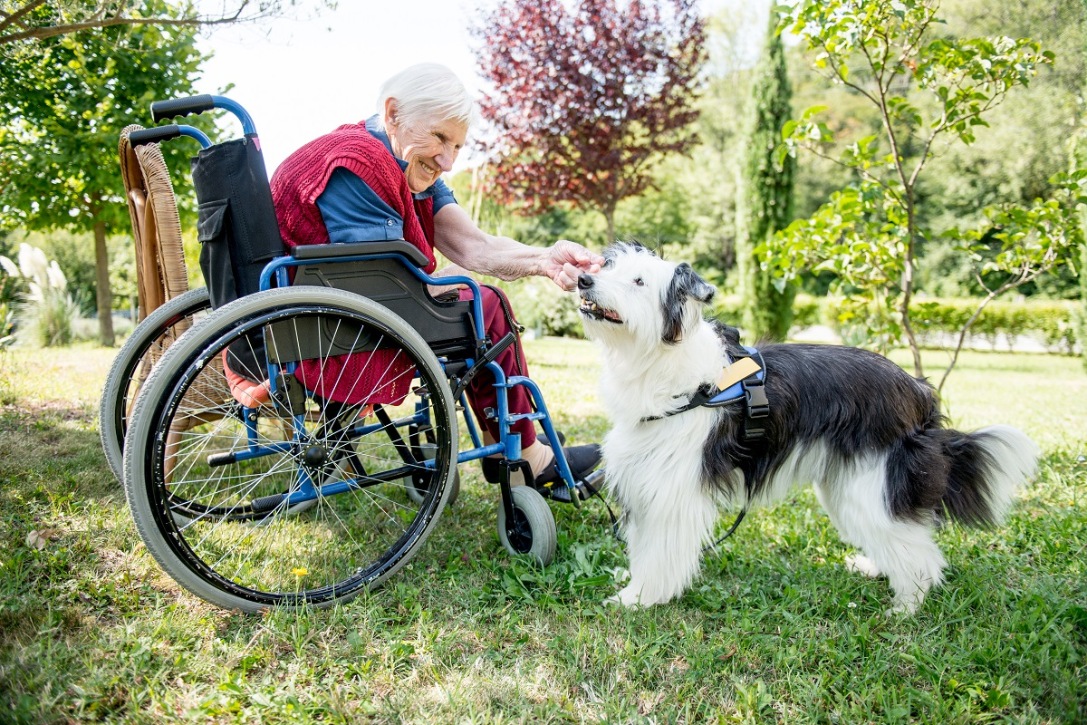 Assistance dog working