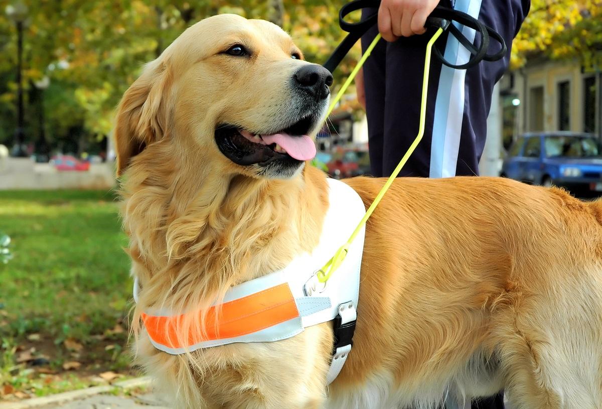 Assistance dog week