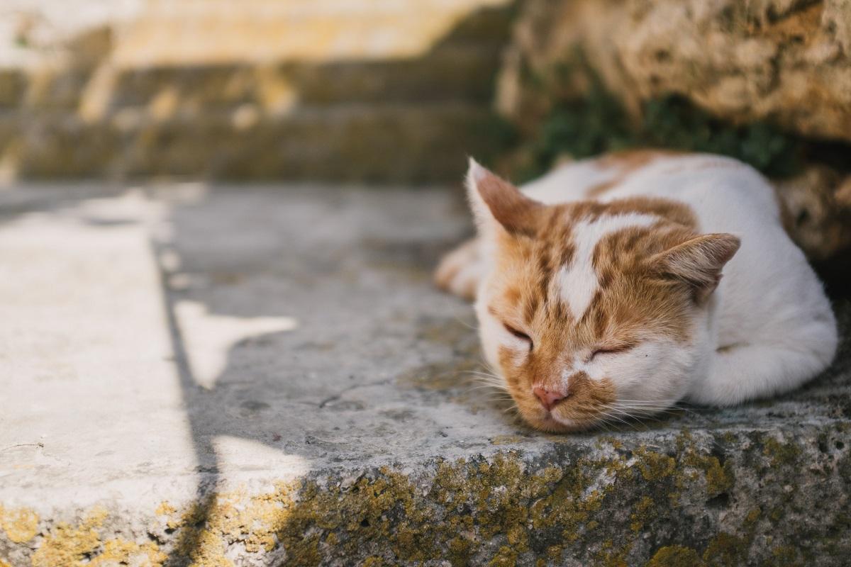 A cat avoiding the sun