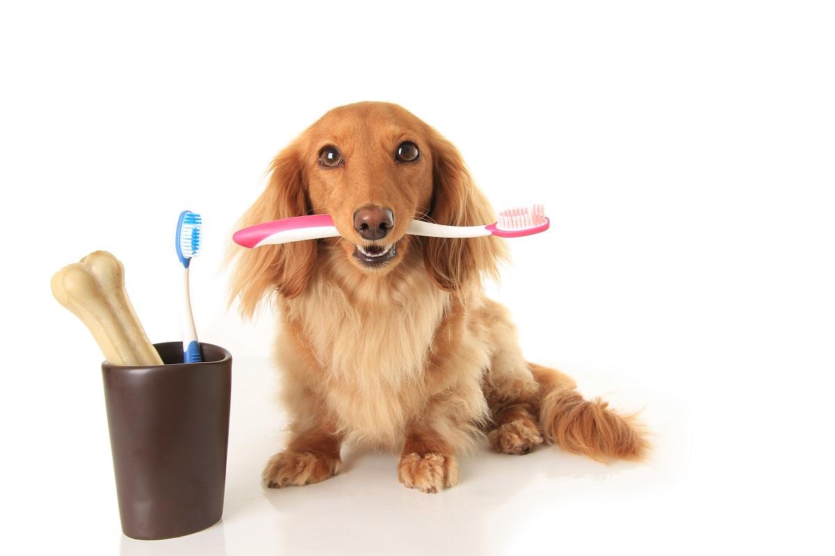 Dog's dental health