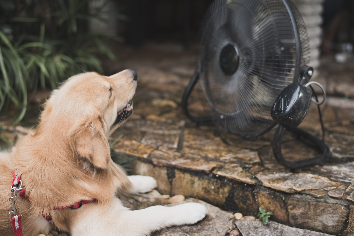 prevent heatstroke in pets